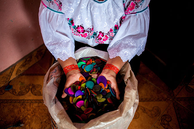 Tagua Seed in Ecuador